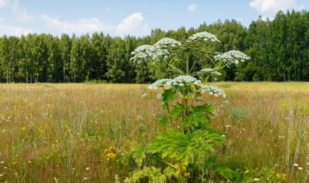 The ultimate guide to weeds: What to yank, what to leave and what you should never ever touch